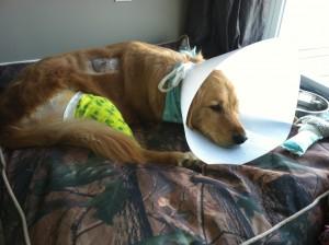 bella post surgery 2